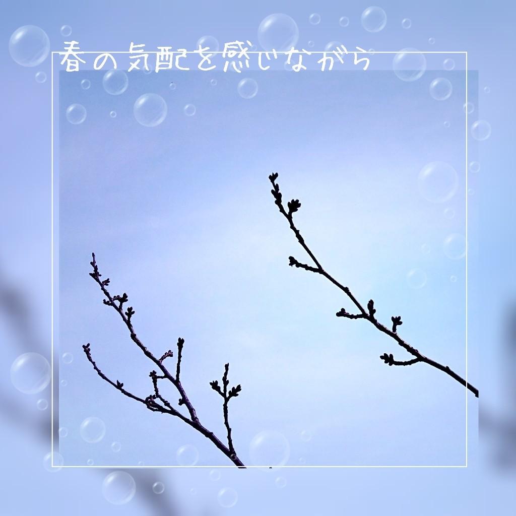 今日から3月_e0063675_12282556.jpg