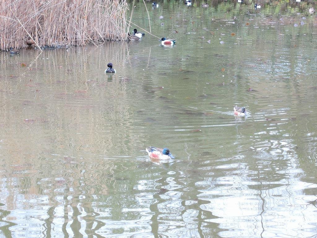 ある風景:Kikuna pond, Yokohama@Feb /fin_d0393923_23512530.jpg