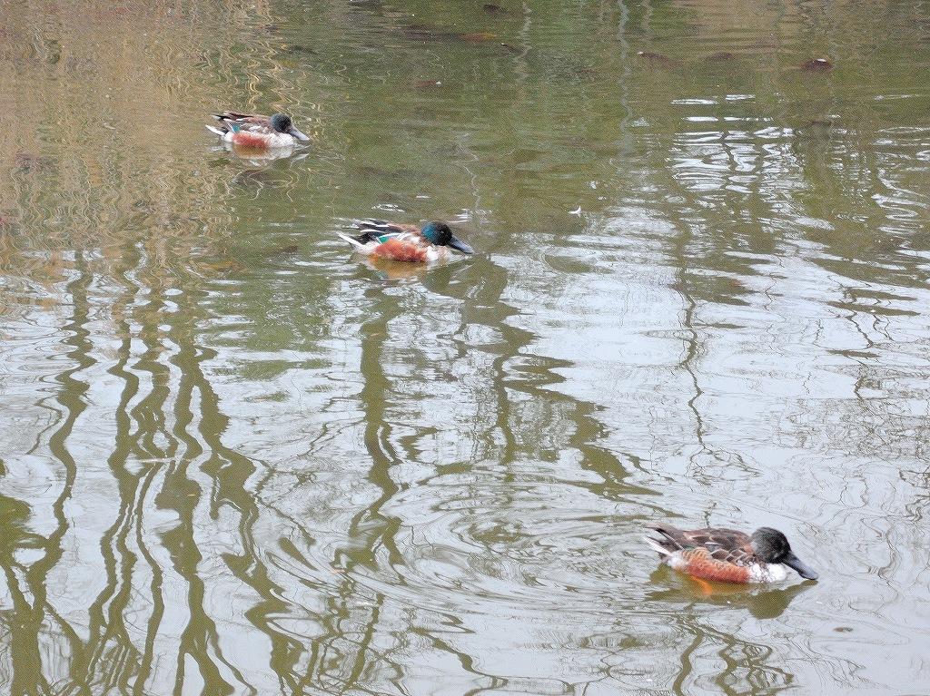 ある風景:Kikuna pond, Yokohama@Feb /fin_d0393923_23512640.jpg