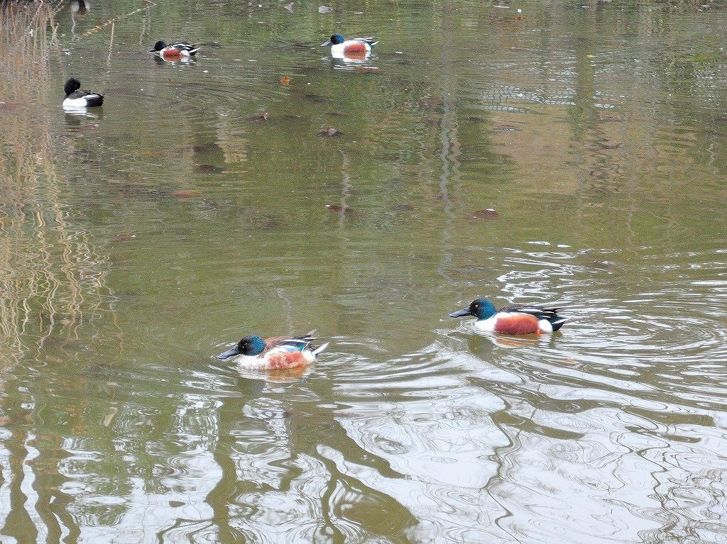 ある風景:Kikuna pond, Yokohama@Feb /fin_d0393923_23512676.jpg