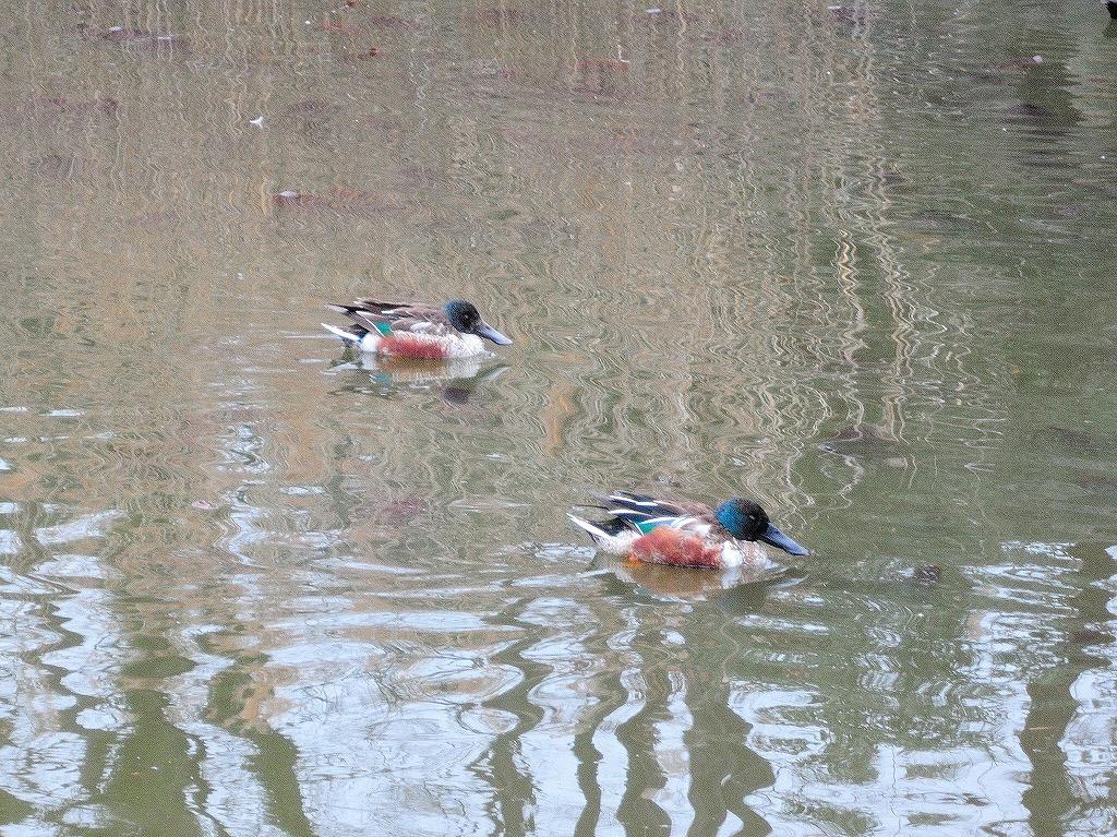 ある風景:Kikuna pond, Yokohama@Feb /fin_d0393923_23512691.jpg