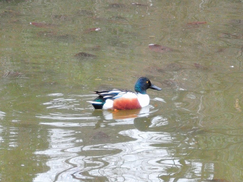 ある風景:Kikuna pond, Yokohama@Feb /fin_d0393923_23513495.jpg