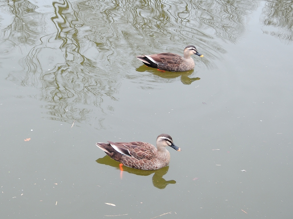 ある風景:Kikuna pond, Yokohama@Feb /fin_d0393923_23513528.jpg