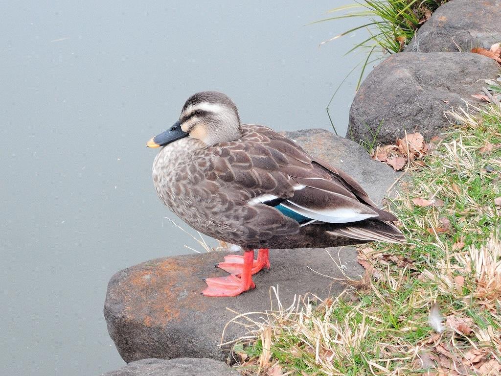 ある風景:Kikuna pond, Yokohama@Feb /fin_d0393923_23513534.jpg