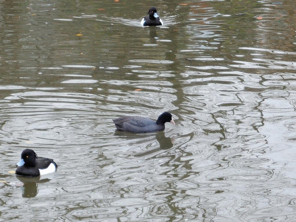 ある風景:Kikuna pond, Yokohama@Feb /fin_d0393923_23513554.jpg