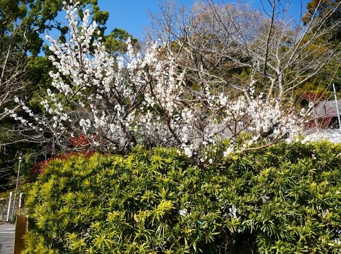 小野田の里 「宇賀部(うかべ)神社」  2021-03-03 00:00_b0093754_21443652.jpg