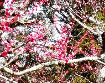 春の訪れをつげるお水取りの和菓子♪_b0194861_23585725.jpg