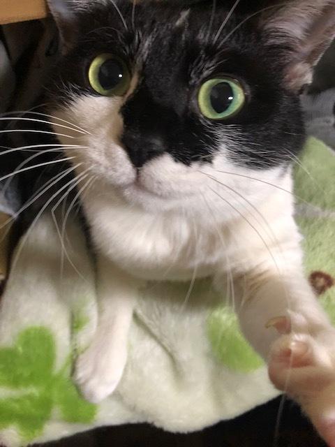 開かずの間と猫の腎不全_a0064067_21413719.jpg