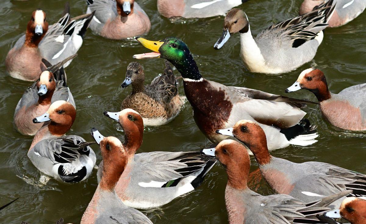 ■ 三島池の冬鳥_d0334796_21511028.jpg