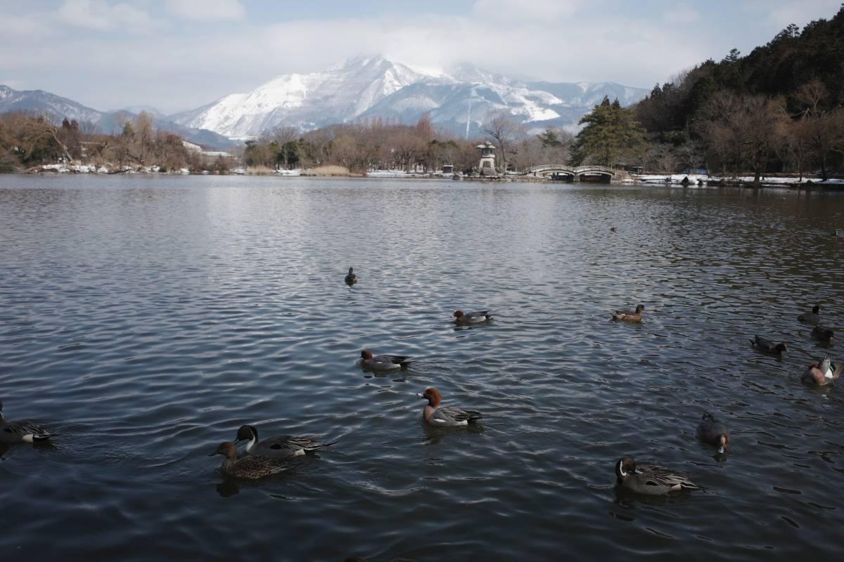 ■ 三島池の冬鳥_d0334796_21515889.jpg