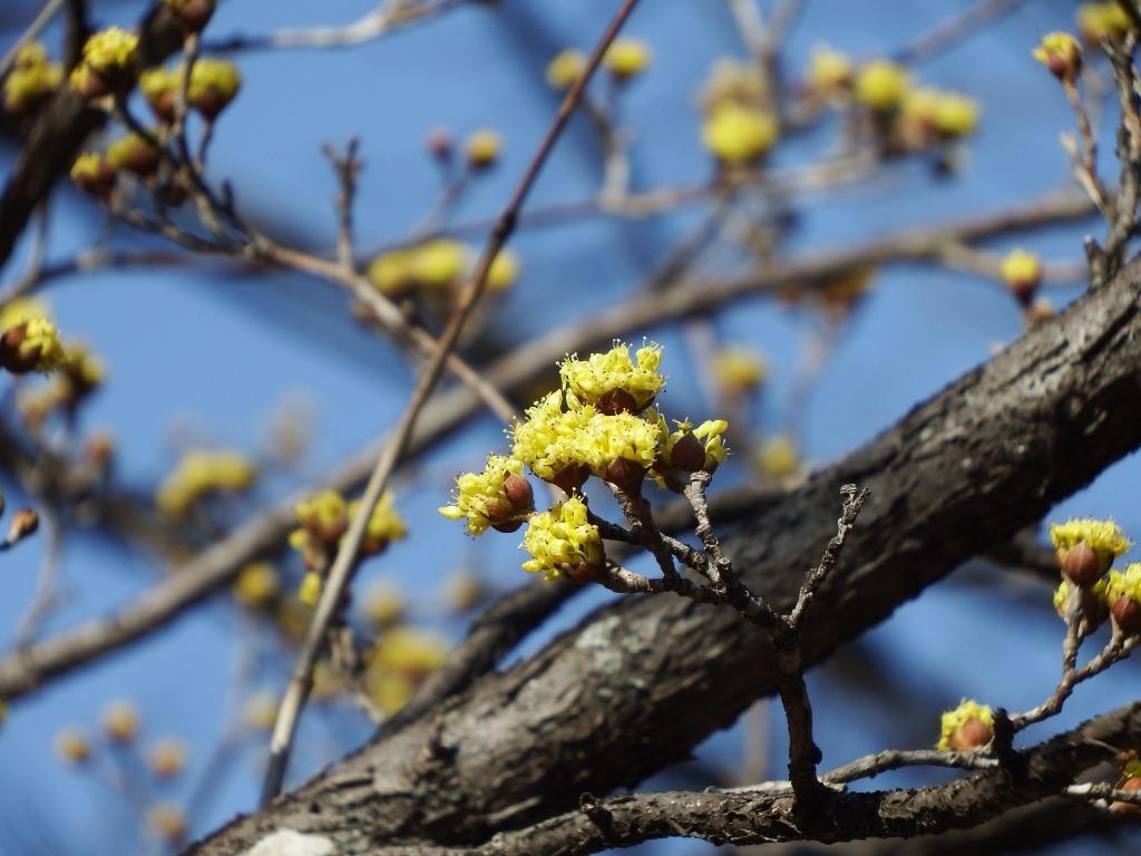 黄金色の春_b0049307_12105427.jpg