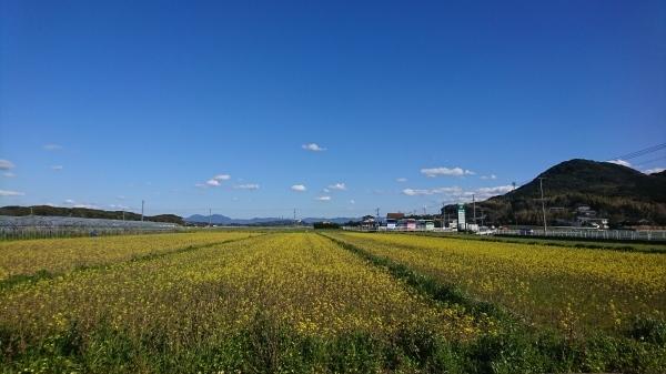 アスパラガス収穫体験開始★_f0224320_13401162.jpg