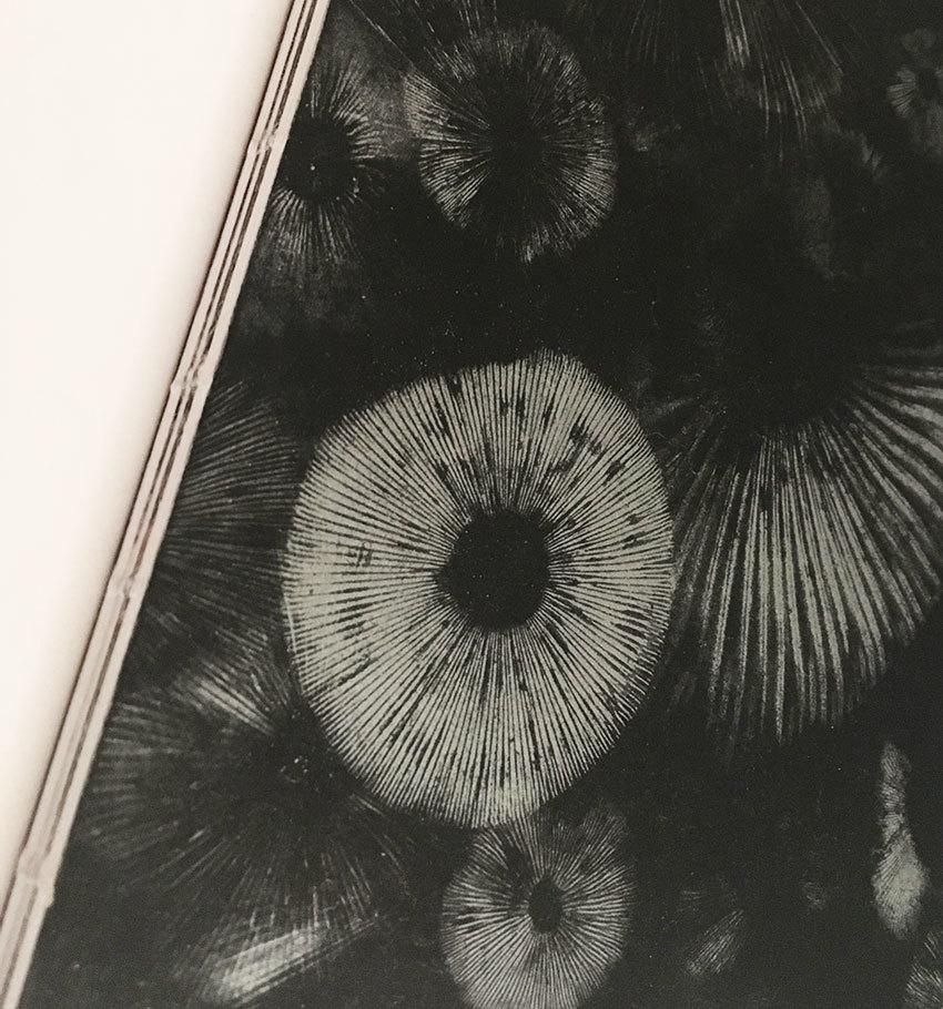 渡辺隆次きのこ画文集『森の天界図像』の背_e0000935_19512567.jpg