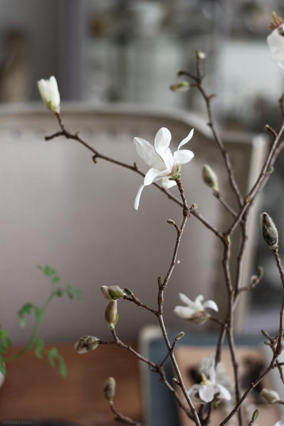 Magnolia_c0161578_16081385.jpg