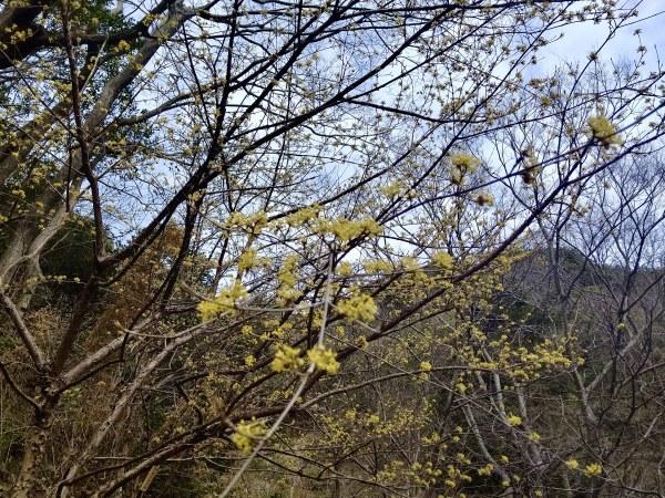 3月4日 振替自由活動日_c0239329_16581017.jpeg
