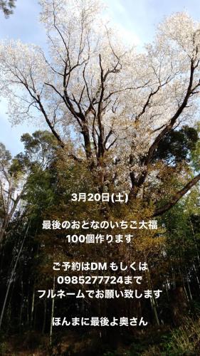 「追加のいちご大福」_d0097644_13483408.jpg