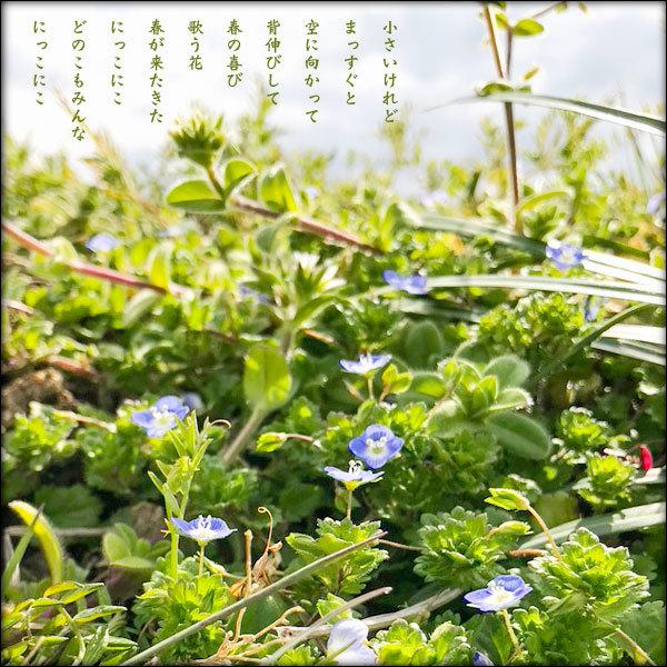 喜びの歌が聞こえる_a0197968_11251922.jpg