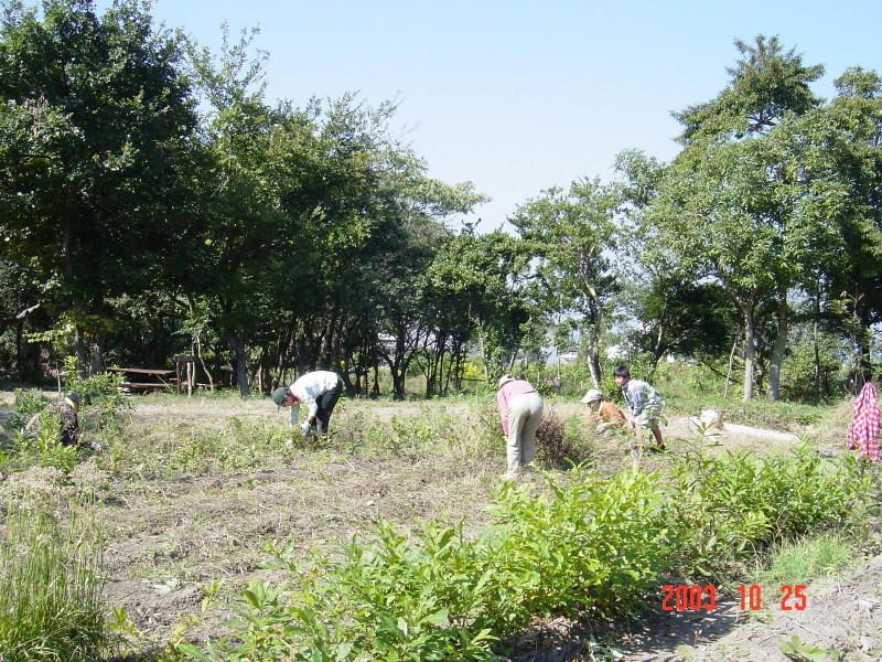うみべの森の歴史⑯「2003年10月の活動」_c0108460_12171541.jpg