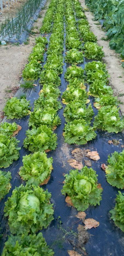これから、収穫を待つ野菜さんたち。_d0026905_18420758.jpg