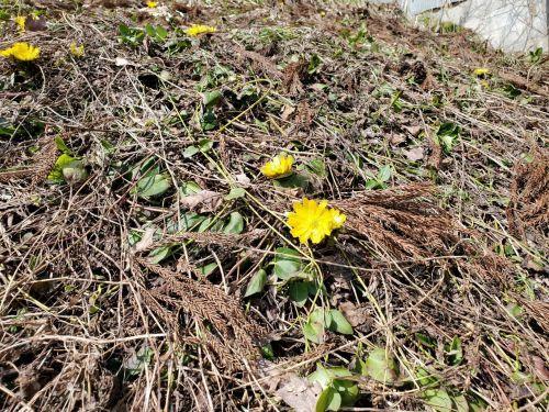 春の訪れ_b0304722_23222697.jpg