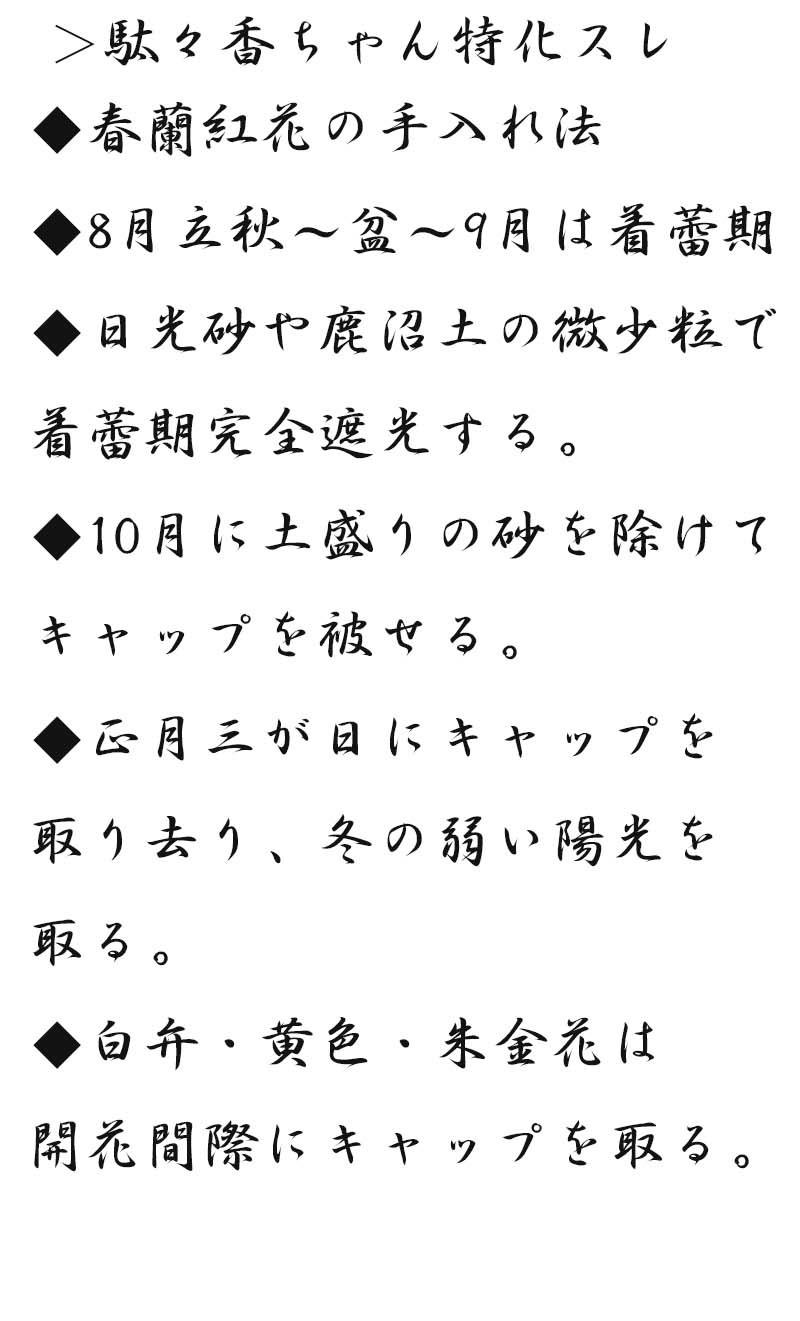 日春紅花の簡単手入れ         No.2085_d0103457_00242980.jpg