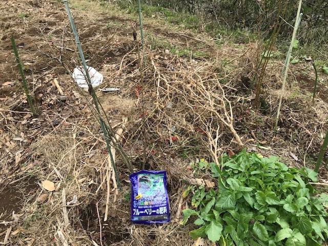 スナップエンドウ初収穫、ブルーベリーに元肥3・5_c0014967_07083578.jpg