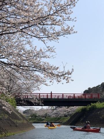 3月末には弓ヶ浜さくらツアー_e0016130_23373496.jpg