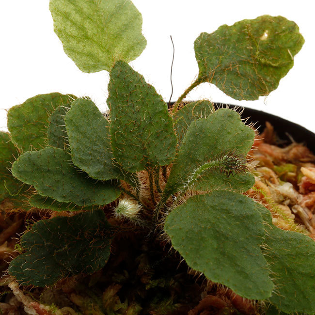 植物、流木などなど。_d0376039_16492677.jpg