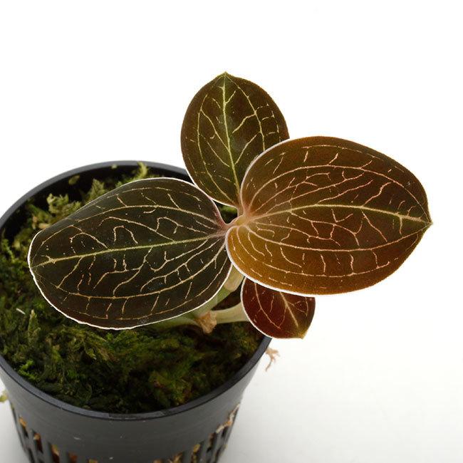 植物、流木などなど。_d0376039_17031460.jpg