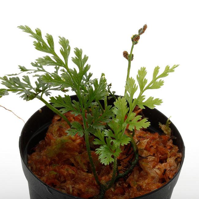 植物、流木などなど。_d0376039_17104932.jpg