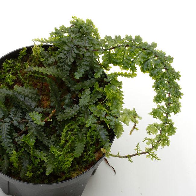 植物、流木などなど。_d0376039_17182610.jpg