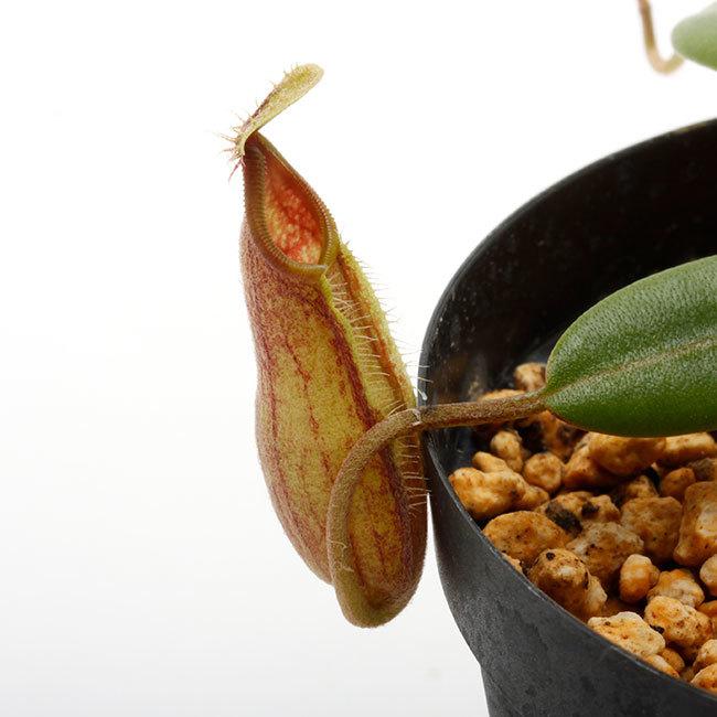 植物、流木などなど。_d0376039_20445581.jpg