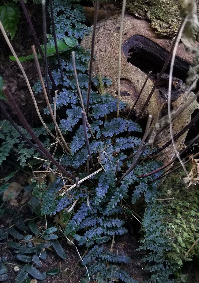 植物、流木などなど。_d0376039_21355862.jpg