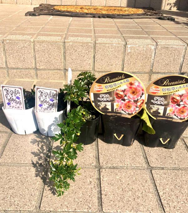 おぎはら植物園さんからお迎えしたお花達♡_a0396654_19374581.jpg