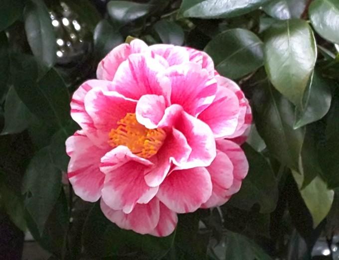 3月6日 「世界一周の日」「修二会」①花ごしらえ_b0255824_17235467.jpg
