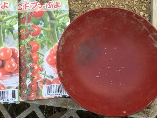 ミニトマト夏野菜種まき2021_e0181260_20352884.jpeg