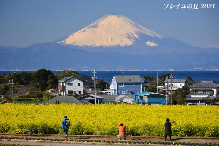園内で富士山  『ソレイユの丘2021』_d0251161_17065621.jpg