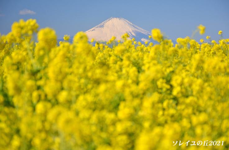園内で富士山  『ソレイユの丘2021』_d0251161_17071553.jpg
