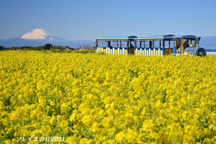 園内で富士山  『ソレイユの丘2021』_d0251161_17074107.jpg