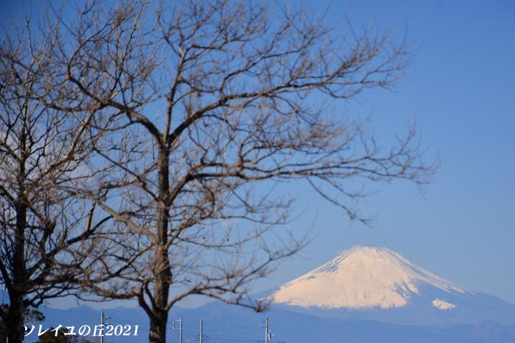 園内で富士山  『ソレイユの丘2021』_d0251161_17080269.jpg