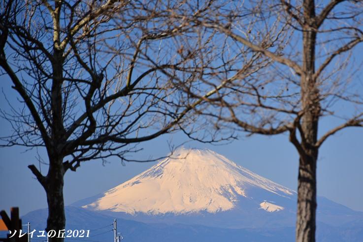 園内で富士山  『ソレイユの丘2021』_d0251161_17081893.jpg