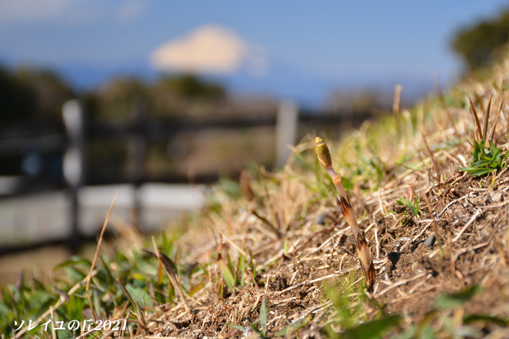 園内で富士山  『ソレイユの丘2021』_d0251161_17095430.jpg