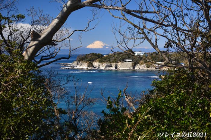 園内で富士山  『ソレイユの丘2021』_d0251161_17131835.jpg