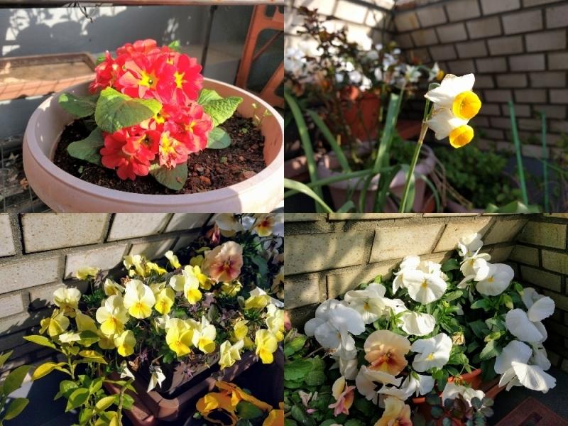 春の花たち@中野店_f0017300_16241882.jpg