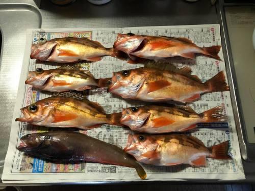 ◆ Fishing ◆_c0078202_16584788.jpg
