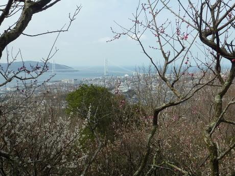 梅と河津桜を見に行こう『塩屋から板宿』_c0218841_11215403.jpg