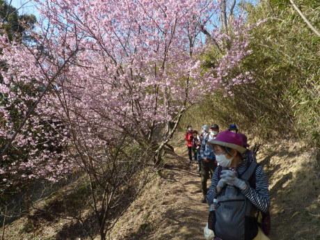 梅と河津桜を見に行こう『塩屋から板宿』_c0218841_11480484.jpg