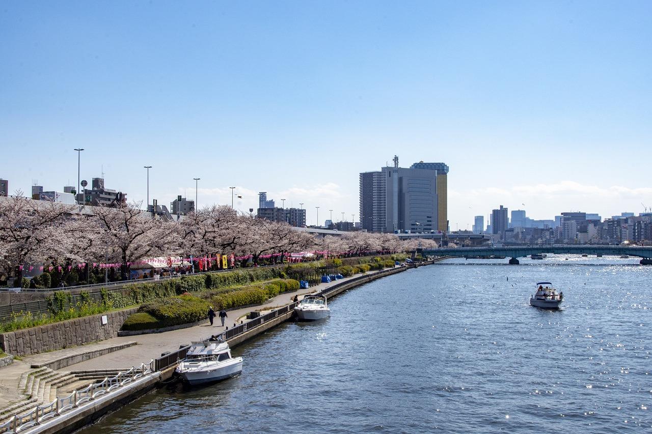 2021年春 今年は、ボートからのお花見はいかがでしょうか_c0027849_15164398.jpg