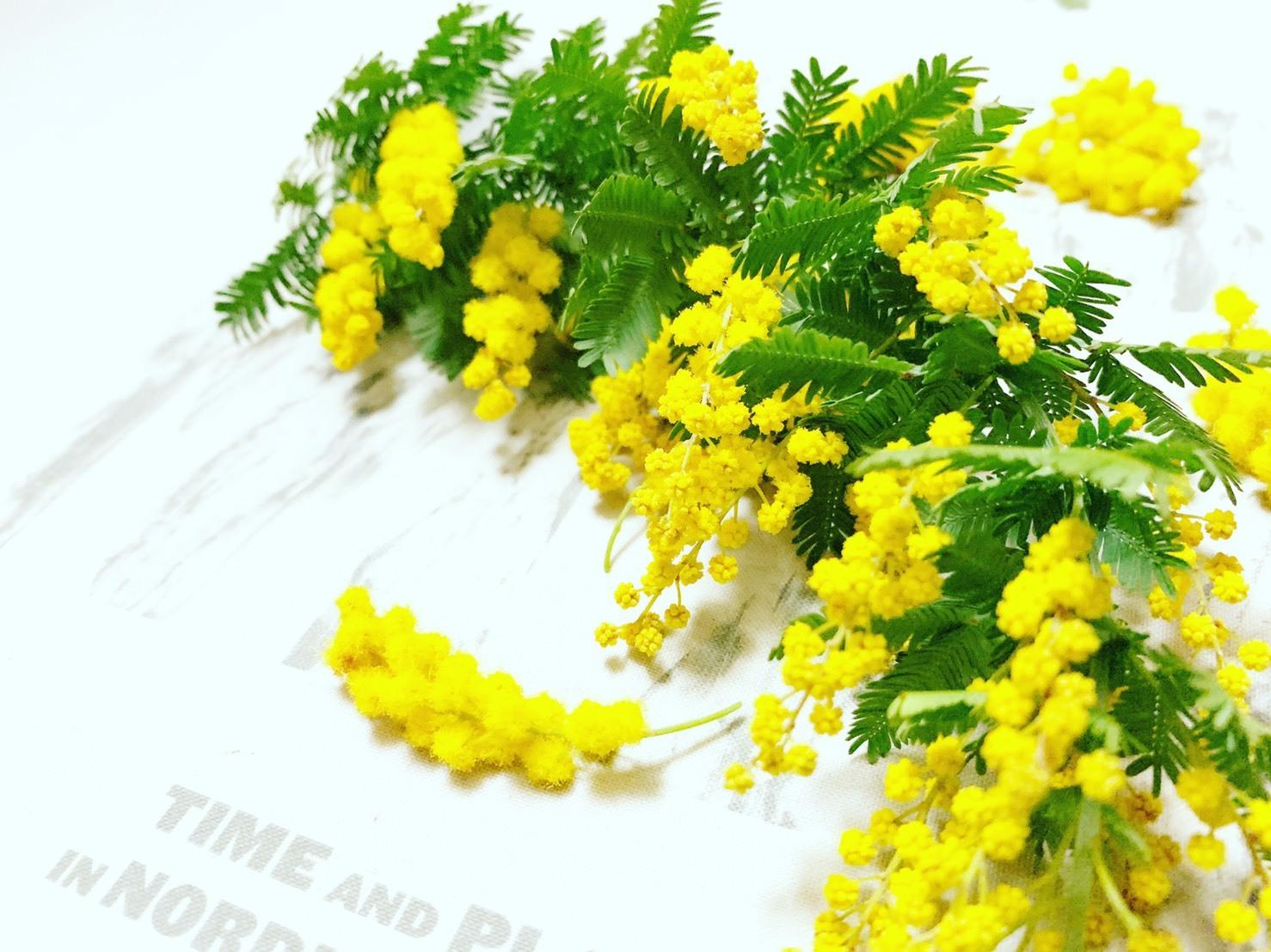 春の花 ミモザ_d0339681_17053388.jpg