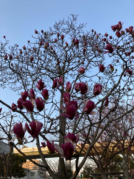 春の花_a0098418_08563399.jpg